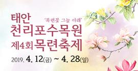 태안 천리포수목원 제4회 목련축제 (목련꽃 그늘 아래) 2019.4.12(금)~4.28(일)