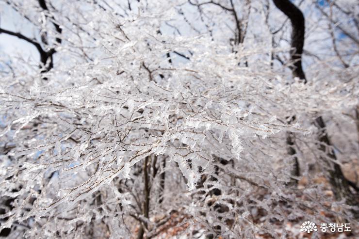 겨울의 마지막 인사,  광덕산 얼음꽃 활짝