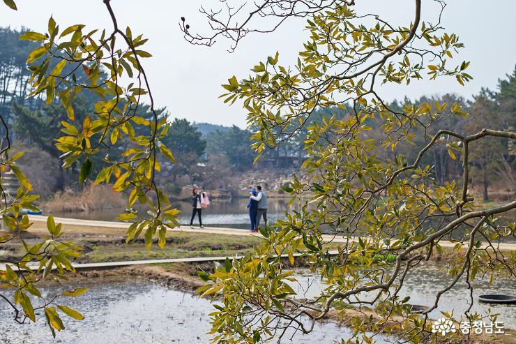 천리포 수목원에도 봄이 왔어요