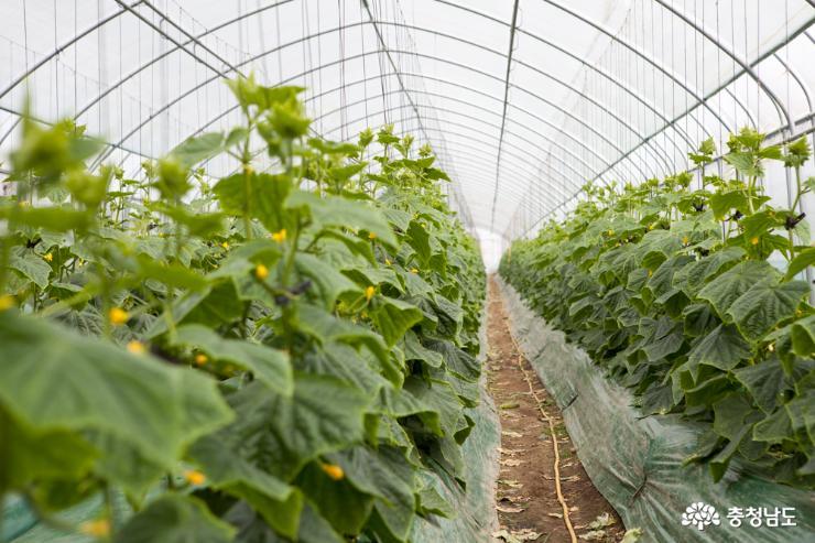 6차 산업의 주인공 여성농업인 2