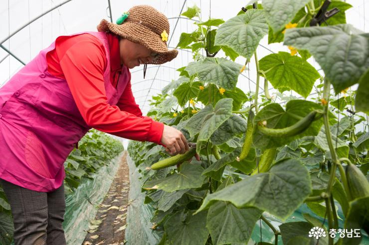 6차 산업의 주인공 여성농업인 4
