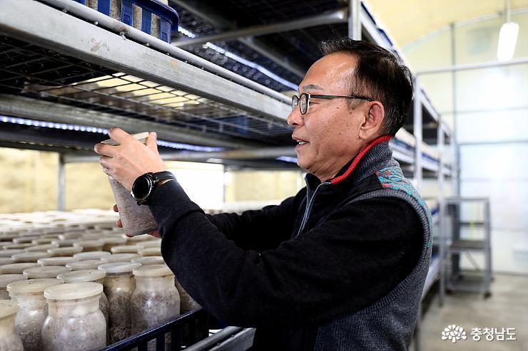 버섯을 보살피는 김석범 대표