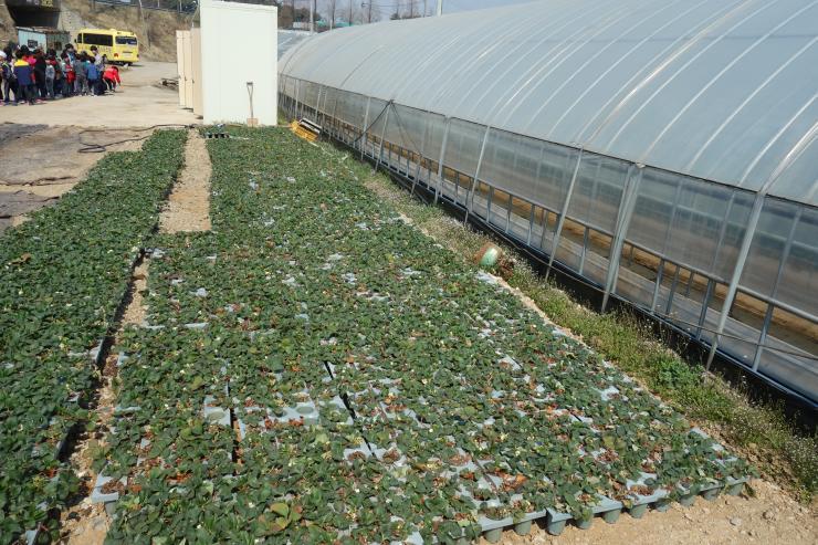 청년 농업인이 일구는 다온딸기 체험농장 8
