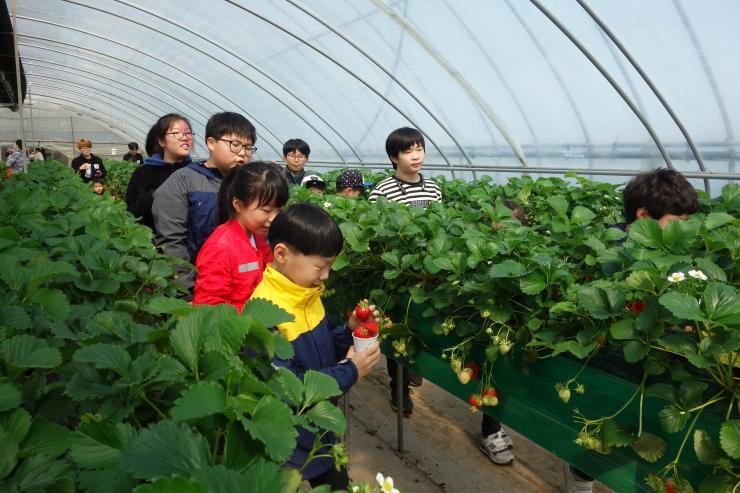 청년 농업인이 일구는 다온딸기 체험농장 14