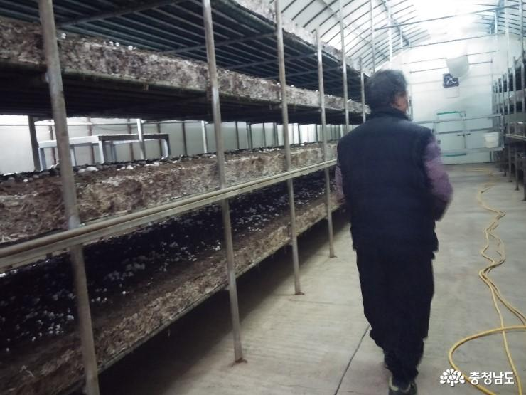보령 '만세 버섯산업특구' 지정을 반기며 4