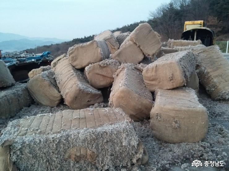 보령 '만세 버섯산업특구' 지정을 반기며 7