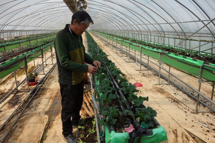 청년 농업인이 일구는 다온딸기 체험농장 5
