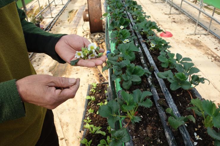 청년 농업인이 일구는 다온딸기 체험농장 7
