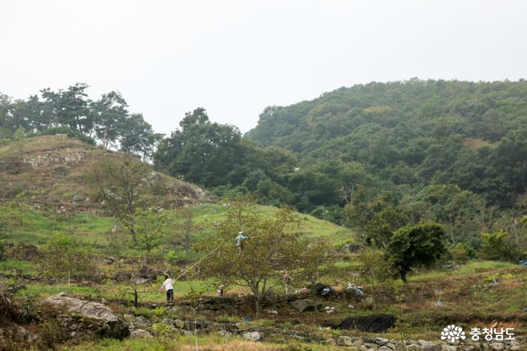 지난 가을 농원에서 호두 수확하는 모습