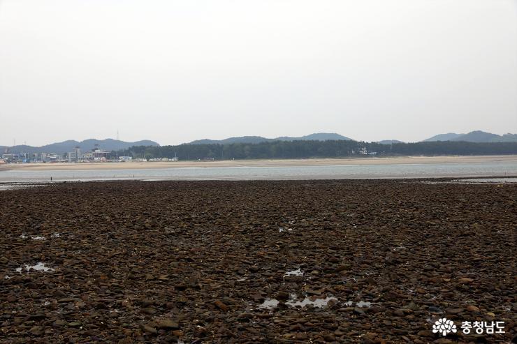 태안군 남면 신온리(곰섬) 앞바다 갯벌.