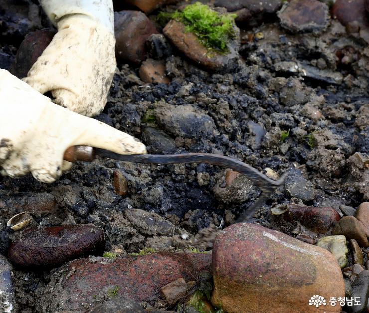 바지락을 캐는 도구는 사람에 따라, 자신의 손이 익숙해진 경우에 따라 각기 다르다.