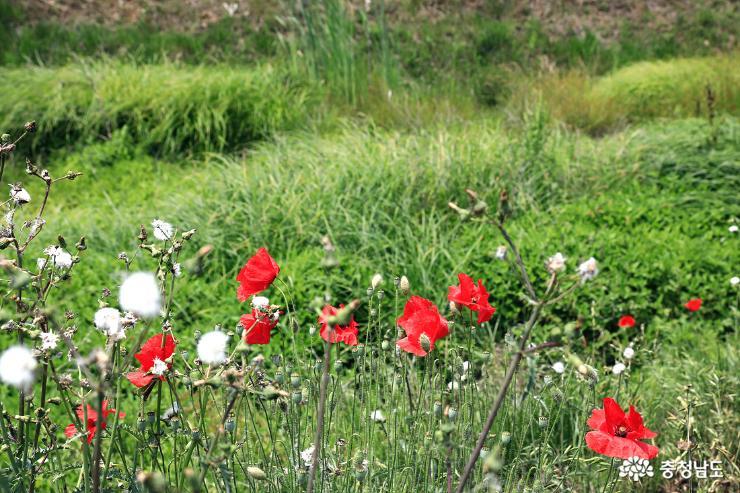 하천에 핀 예쁜 들꽃