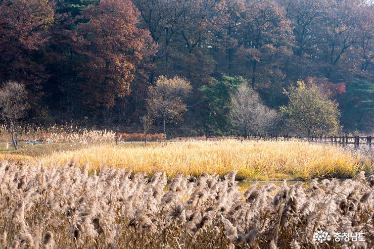 가을과 이별중인 독립기념관 단풍나무길