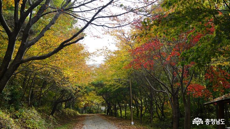 아름다운 가을숲, 용현자연휴양림