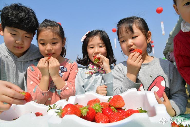 '새콤달콤' 논산딸기축제 4월 4일 연다