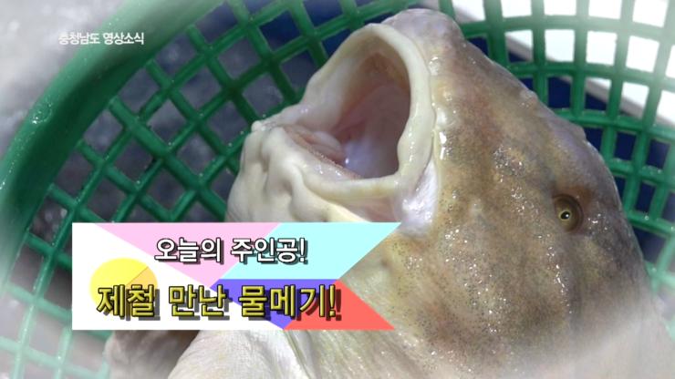 [종합] 충청남도 영상소식 5회