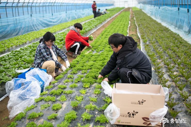 함께 성장하는 농업 '젊은협업농장'