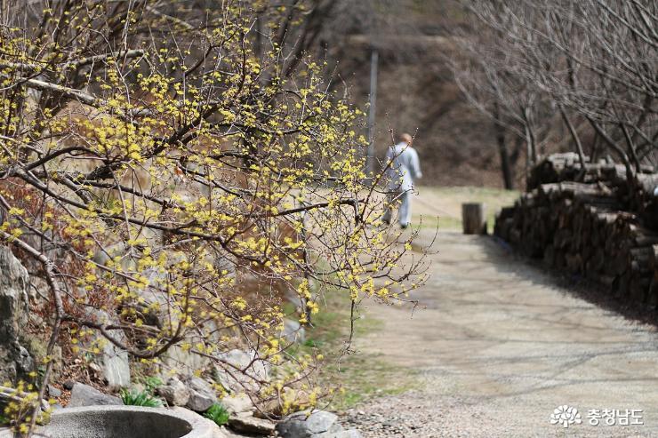 꽃망울 톡…톡 봄이 오는 광덕사