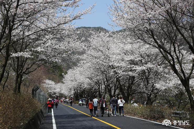 '금산비단고을 산꽃축제' 14일 팡파르