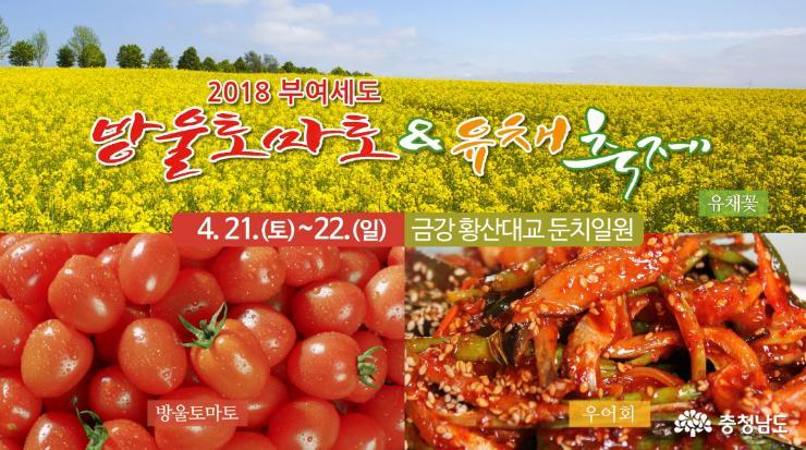 방울토마토&유채 축제 21일 개막