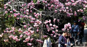봄축제로 물든 충남, 눈과 입이 즐겁다