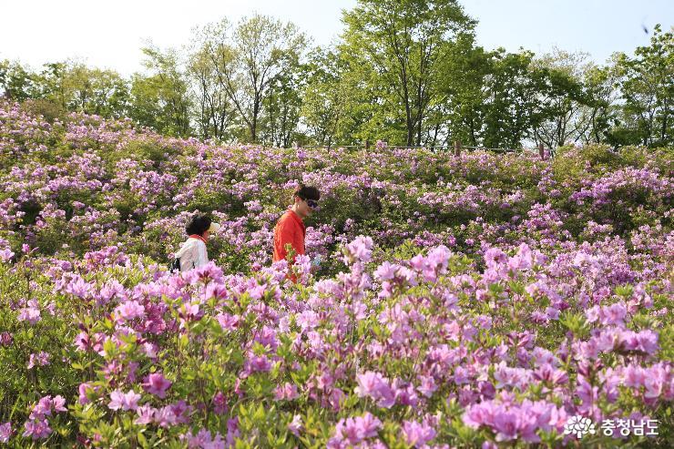 연분홍 옷입은 대둔산 월성봉