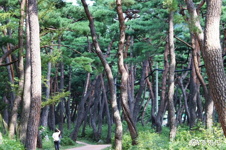 천년의 숲길에서 만난  봉곡사