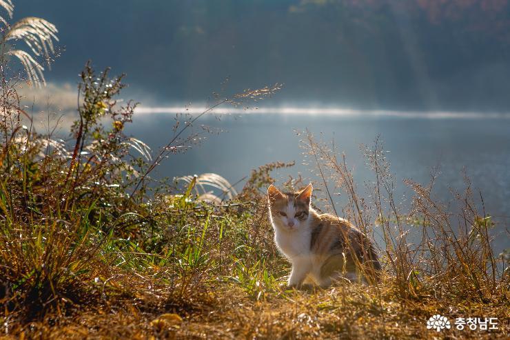 아름다운 반영, 서산 용비지 사진