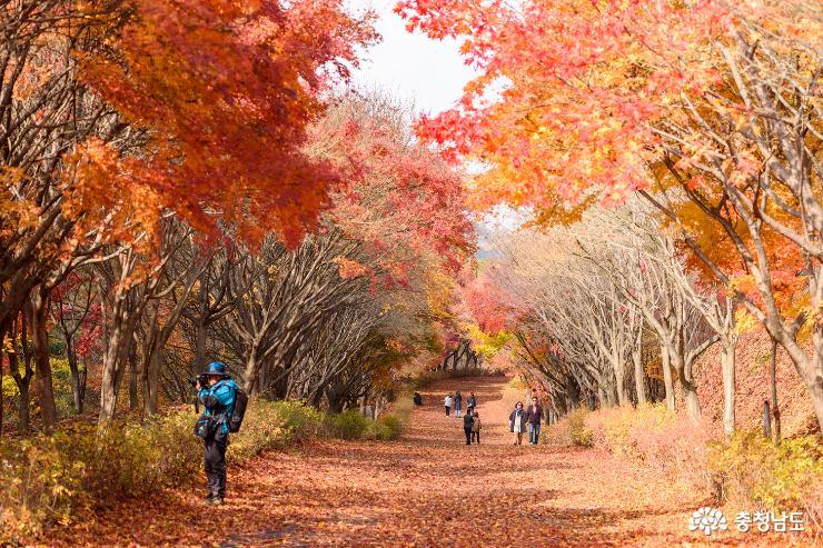 가을과 이별중, 독립기념관 단풍나무숲길 2