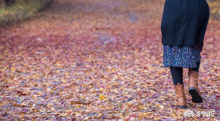 가을과 이별중, 독립기념관 단풍나무숲길 3