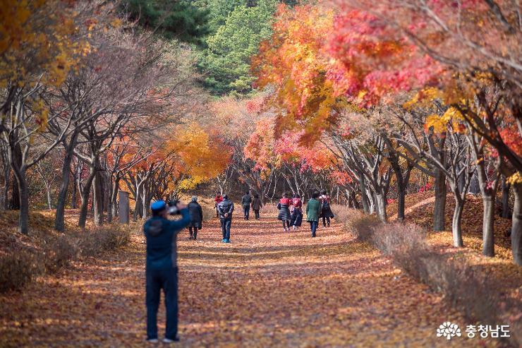가을과 이별중, 독립기념관 단풍나무숲길 4