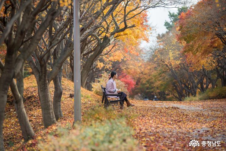 가을과 이별중, 독립기념관 단풍나무숲길 5