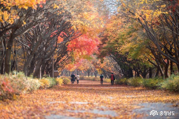 가을과 이별중, 독립기념관 단풍나무숲길 6