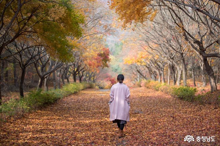 가을과 이별중, 독립기념관 단풍나무숲길 7