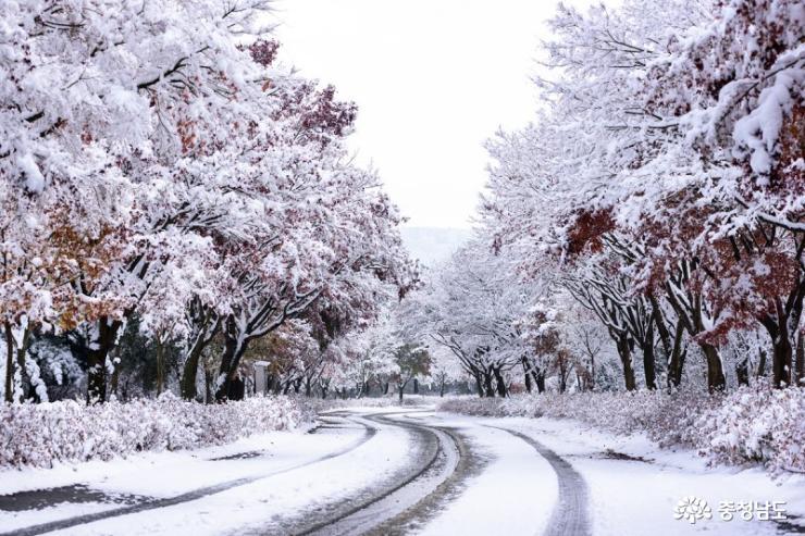 가을과 이별중, 독립기념관 단풍나무숲길 8