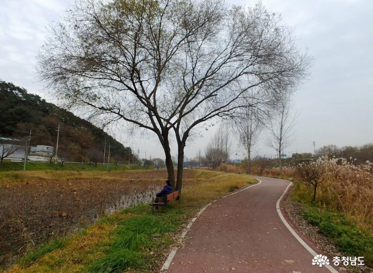 가을을 다 떨구고 앙상한 가지만 남은 나무가 겨울을 기다린다.