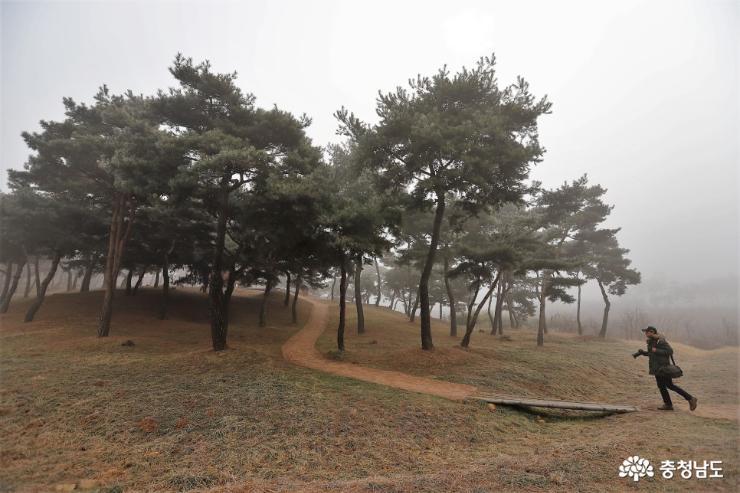 몽환적인 분위기 소나무 사진촬영 명소