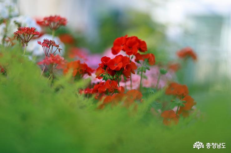 한 겨울에 만난 온실 속 꽃