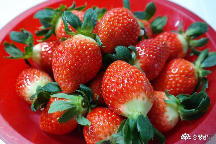 오감이 즐거운 논산 딸기
