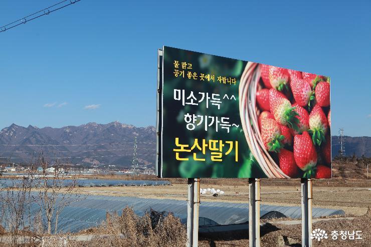 논산시 상월면 논산 딸기 광고판