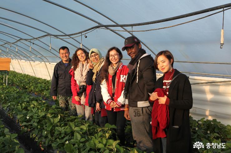 유학생들과 함께한 딸기체험