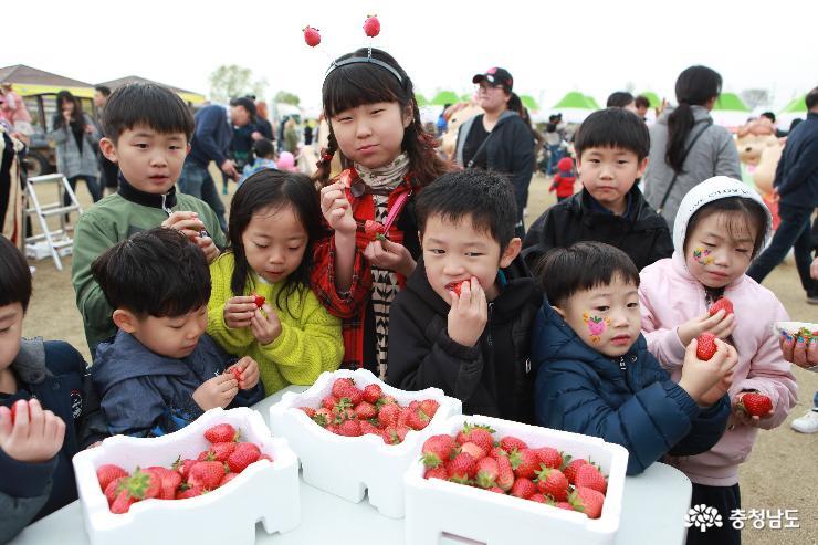 논산 딸기 축제 현장 (2018년 4월)