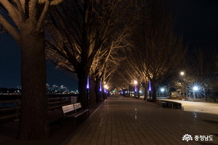 아산 은행나무길의 밤풍경 사진