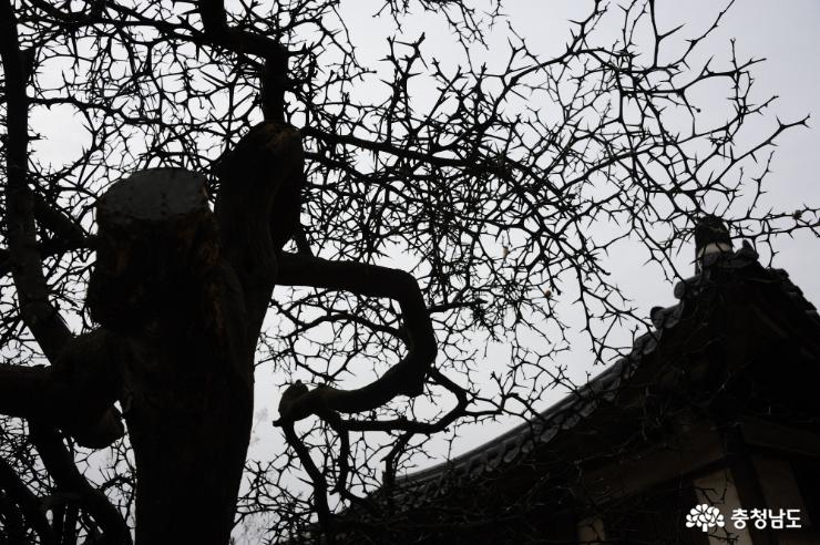 탱자나무와 기와지붕