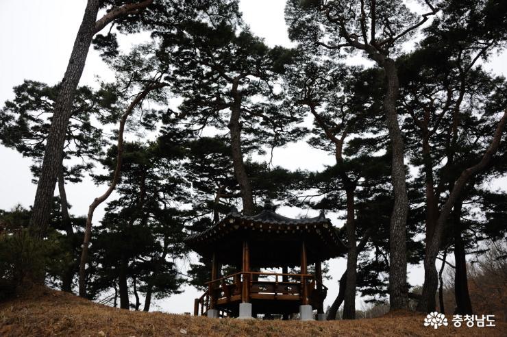 정자가 있는 소나무 숲