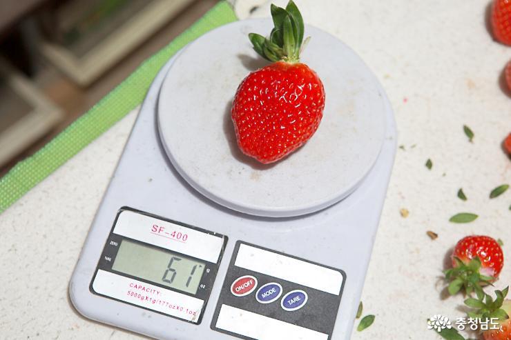 달콤한 향기가 가득한 논산 딸기 농장 10
