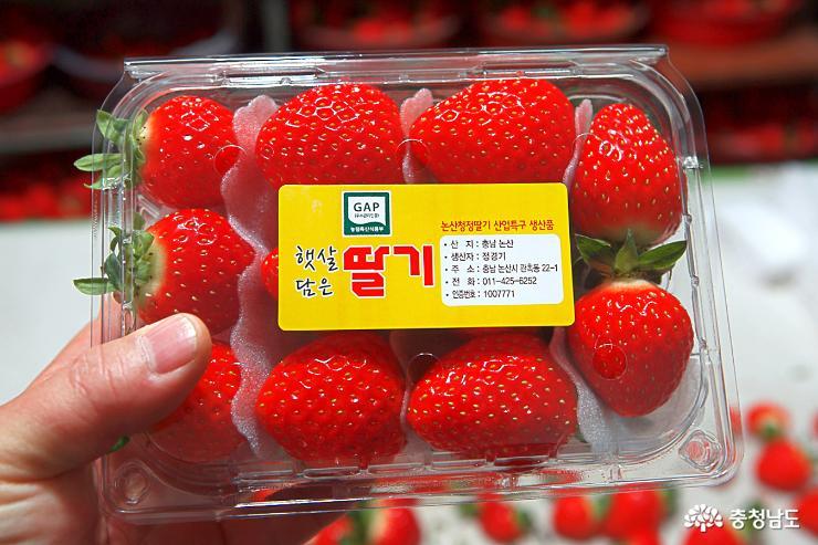 달콤한 향기가 가득한 논산 딸기 농장 13