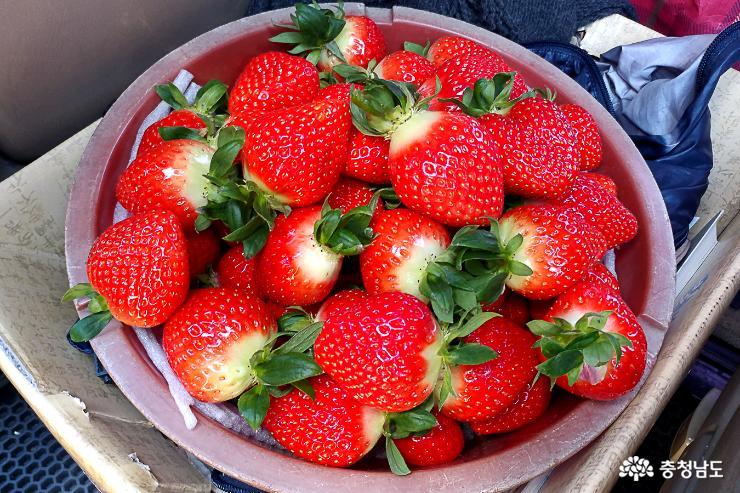 달콤한 향기가 가득한 논산 딸기 농장 14