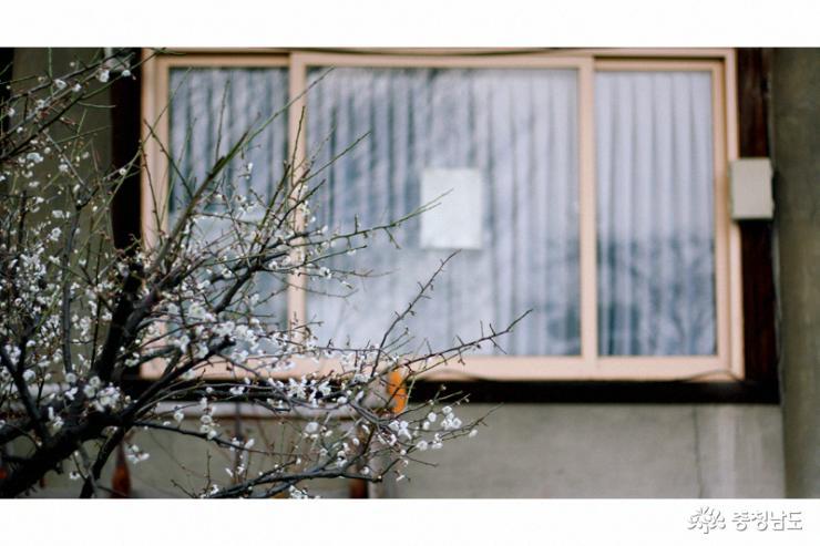 고즈넉한 절의 봄맞이, 각원사 사진