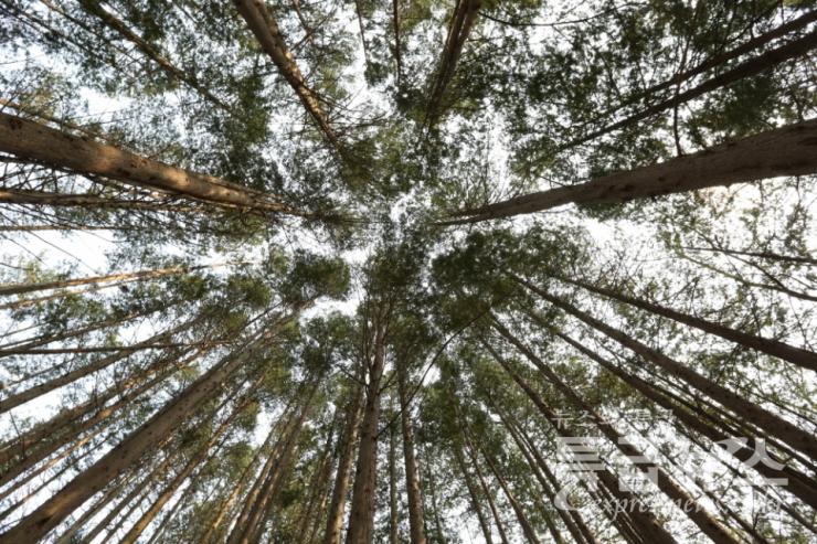 머물고 싶은 천탑마을 편백나무 숲